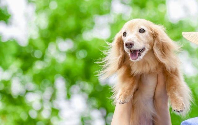 犬の写真です