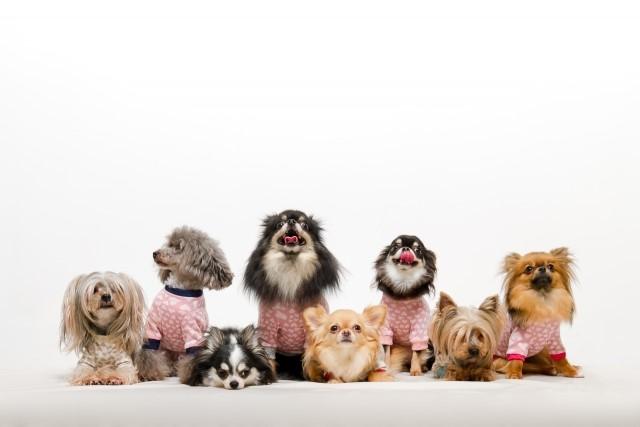 子犬たちの写真です