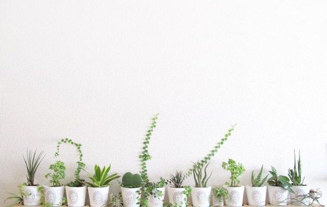 お洒落な観葉植物の写真です