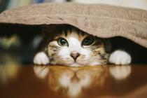 猫がのぞいている写真です