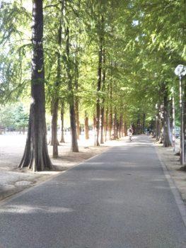 別所沼公園3